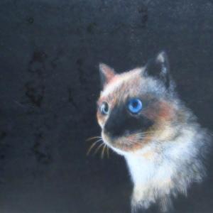 猫7(シャム猫)