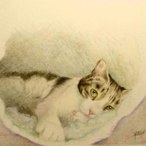 猫ボックスでくつろぐゴン太