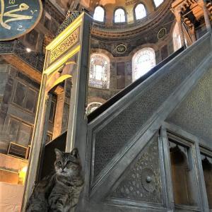 アヤソフィア在住、トルコいちの有名猫 ~先どり猫の日~