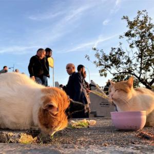 イスタンブール写真館 -空と犬と猫と-