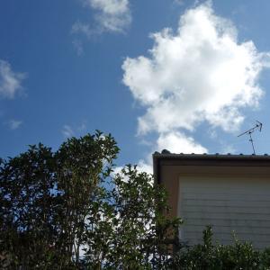 裏庭でリハビリ兼日光浴