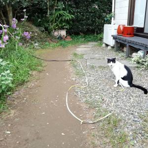 裏庭でリハビリ