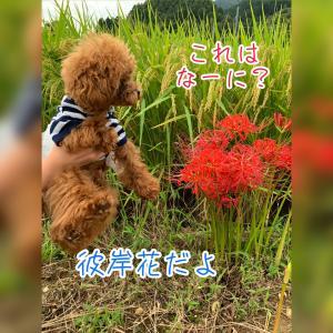 ★お彼岸二日目★