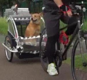 ロードバイクに「補助犬」を義務づけよ