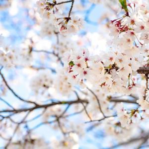 【鬼ヶ島通信#816】~枯れ木に花が咲く (4825投稿)