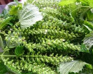 朝採り・無農薬・・新鮮野菜 ~ タカギの畑直売所・・国道413号
