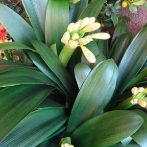 春の花々 (2-1)