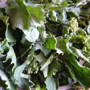 かき菜の料理 ~ 40秒で スゴッ!   北丹沢のふもとの畑産