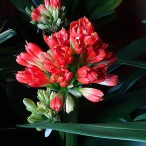 花に癒され~ほっと一息    相模原市緑区丹沢の山すそから    (2-1)