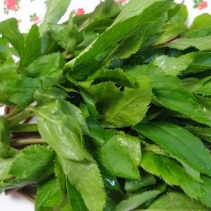 明日葉~ 旬の健康野菜