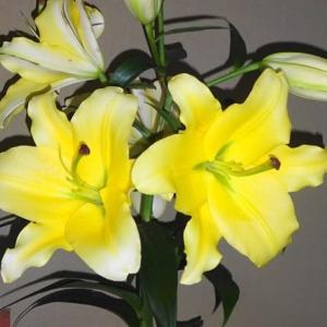 花に癒され~カサブランカ    北丹沢の麓の店