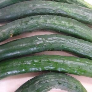 夏野菜・・きうり、ナス、とまと、ピーマンなど  国道413号高城商店
