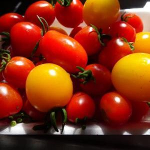 夏の果物・野菜 ~ 無農薬 タカギの畑では