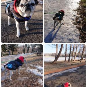 1月の散歩とごろ寝 緑ヶ丘公園とか