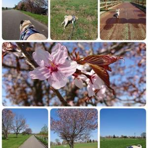 5月 花見散歩