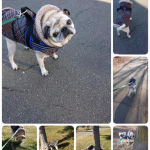 12月の散歩
