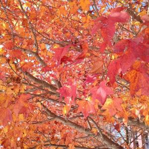 オー!マイステーキ&紅葉の美しい季節~4つの最後の歌より、夕映えの中で