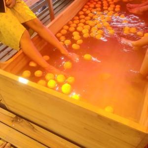 ゆず香るん祭り&日経WOMANのムーミン万年筆が優れもの~柚の香や秋もふけ行く夜の膳