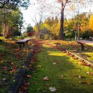 太陽が丘メタセコイア通り&断捨離な連休~メタセコイアの花言葉「平和・楽しい思い出」