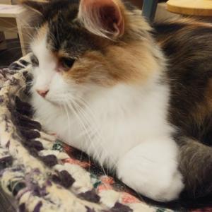 猫カフェPuchi Marry♪イオンモールかほく&アルビスのポイント券~猫の二重唱