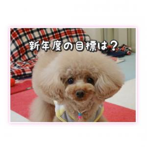 新年度☆*゚
