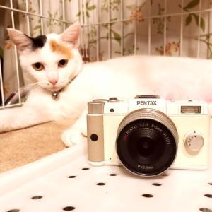 カメラにゃ♪