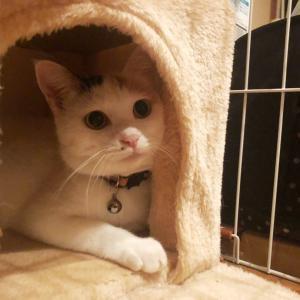 猫パンチと謎の呪文♪