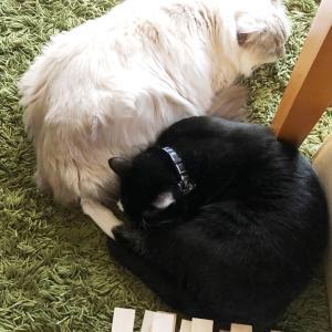朝寝の猫たち♪