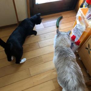 キュウリと猫と変わったウロコ♪