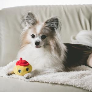 台風対策の犬ごはん用食材ストック