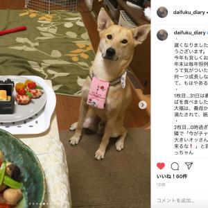犬の食レポ:お年玉下げて、ワンプレートおせち待ち♡
