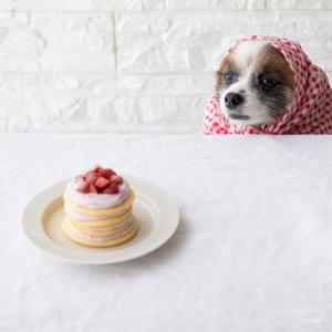 犬のホットケーキ作りはホットケーキミックスではなく自家製で。
