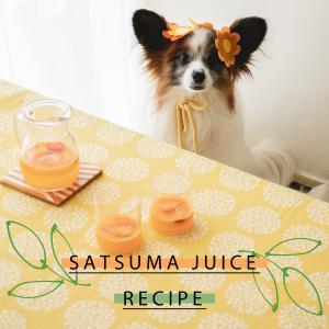 レシピあり☆ミキサーにかけるだけ!簡単みかんのジュース(手作り犬おやつレシピ)