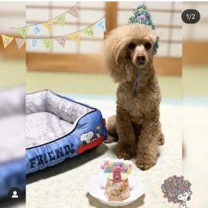 犬の誕生日に!ごはんと野菜をレンジでチン!のスペシャルメニュー