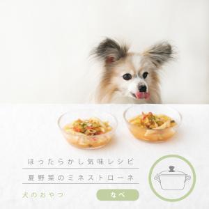 パスタと夏野菜を一緒に煮込む、わんこのミネストローネ(手作り犬おやつレシピ)