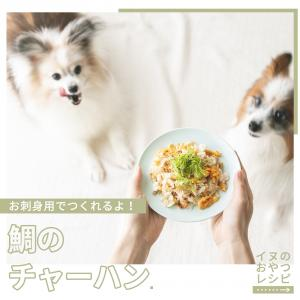 お刺身用の鯛でOK!犬用たいめし風チャーハンの作り方(手作り犬おやつレシピ)