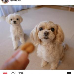 犬の食レポ:すっごいサクサクのパイナップルクッキー(手作り犬おやつ)