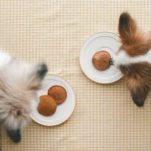 きなこと卵だけで作れる犬用パンケーキ♪