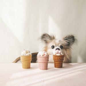 犬用アイスレシピとセリアの可愛いアイス容器