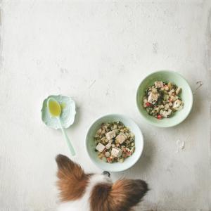 フライパンひとつで作れる夏の犬ごはんレシピ