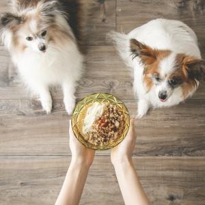 残ったそうめんで、犬用担々麺ごはん