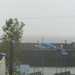 台風の為、全便欠航です。
