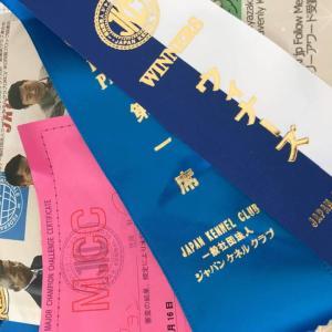ユーノちゃんのショーチャレンジ 本日チャンピオン完成です。