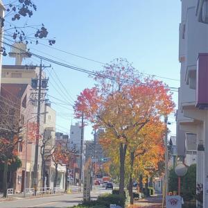 心も体も温まる秋色のティータイム