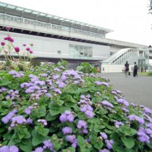 舎人公園の花