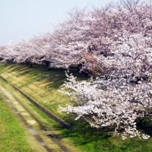 赤羽桜堤1