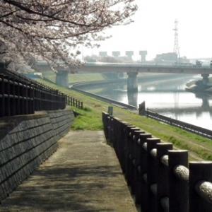 赤羽桜堤3