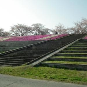 赤羽桜堤5