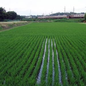 浦和水田風景