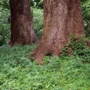 上野巨木の森